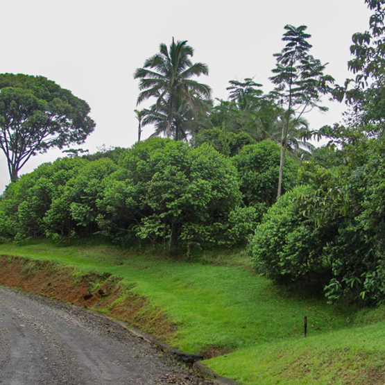 Costa Rican Property for Sale